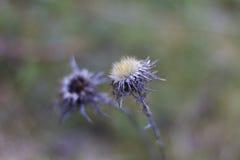 Detalj av en lös blomma Fotografering för Bildbyråer