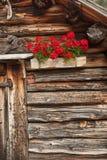 Detalj av en traditionell gammal balkong med röda pelargon från ett gammalt hus i St Magdalena i Val di Funes Royaltyfria Bilder