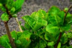 detalj av en växts blad Royaltyfria Foton