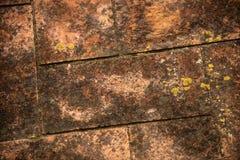 Detalj av ett gammalt golv med mossa royaltyfria bilder