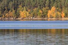 Detalj av färgrika träd för höst med vatten, tjeckiskt landskap royaltyfri foto