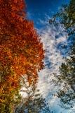 Detalj av färgrika träd för höst och blå himmel arkivfoto