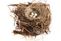 Detalj av fågelägg i rede Royaltyfri Foto