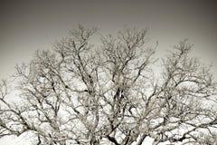 Detalj av filialers träd Arkivfoto