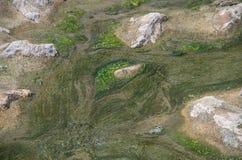 Detalj av flodbädden Royaltyfri Fotografi