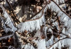 Detalj av frost på en filial av vinranka 13 Royaltyfria Bilder
