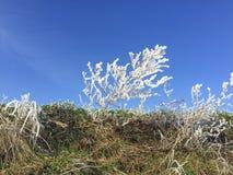 Detalj av gräs i hoarfrost royaltyfria bilder