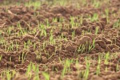 Detalj av grönt gräs som växer på jordningen royaltyfri foto