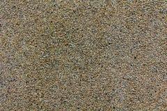 Detalj av grusgolvtextur, små stenar i betong Royaltyfria Foton