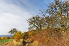 Detalj av höstlandskapet fotografering för bildbyråer