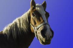 Detalj av huvudet av hästen med ljus man Royaltyfri Bild