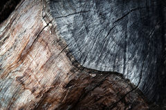 Detalj av kanten av en gammal trädstam Royaltyfri Foto