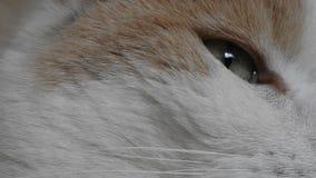 Detalj av kattögat