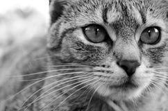 Detalj av katthuvudet arkivbild