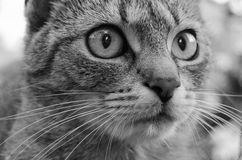 Detalj av katthuvudet royaltyfri fotografi