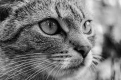 Detalj av katthuvudet royaltyfri bild