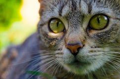Detalj av katthuvudet royaltyfria foton