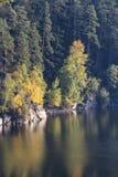 Detalj av mörka träd med färgrika sidor, tjeckiskt landskap royaltyfri foto