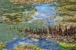 Detalj av mangroves, Zanzibar arkivbilder