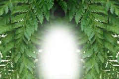 Detalj av ormbunkebladet, grön bakgrund för symmetri Fotografering för Bildbyråer