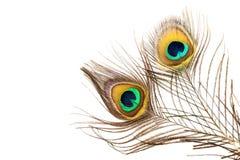 Detalj av påfågelfjädern Arkivfoton