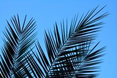 Detalj av palmblad fotografering för bildbyråer