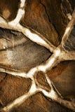 Detalj av sandstenstentrottoar Arkivfoton