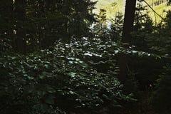 Detalj av skogen över fördämningen Brezova i tjeckisk natur i sommar royaltyfri fotografi