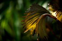 Detalj av små gräsplansidor i morgonljuset arkivfoto