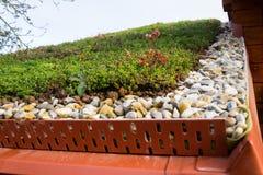 Detalj av stenar på omfattande grön täckt uppehälletakvegetation royaltyfri foto