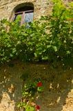 Detalj av 13th århundradeRaÄ  en klostervägg med vinrankan och röda blommor Royaltyfri Foto