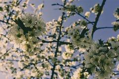 Detalj av trädknoppen arkivfoto