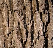 Detalj av trädskället Royaltyfria Foton