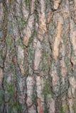 Detalj av trädskället Arkivfoton