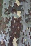 Detalj av trädskället Arkivbilder