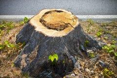 Detalj av trädstubben från för en tid sedan klippt träd royaltyfri foto