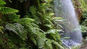 Detalj av vattenfallet lindarna, i ön av La Palma, kanariefågelöar, Spanien arkivfilmer