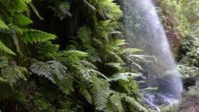 Detalj av vattenfallet lindarna, i ön av La Palma, kanariefågelöar, Spanien långsam rörelse arkivfilmer