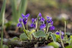 Detalj av violett blom Arkivfoton