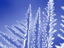 Detalj för isskärvamakro crystalline royaltyfri foto