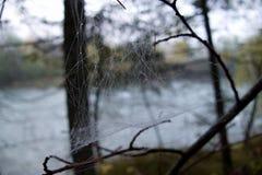 Detalj för spindelrengöringsduk med en morgondagg royaltyfria bilder