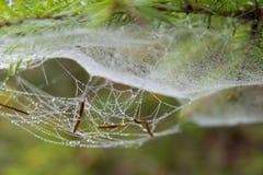 Detalj för spindelrengöringsduk med en morgondagg arkivbilder