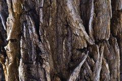 Detalj för trädskäll royaltyfri fotografi