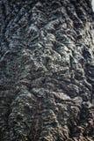 Detalj för trädskäll Arkivbilder