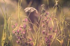 Detalj från drömlik äng för sommar med blommor arkivfoto