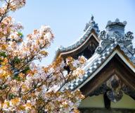 Detalj på det japanska tempeltaket mot blå himmel under säsong för körsbärsröd blomning Royaltyfri Bild