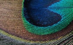 Detalj som är nära upp av påfågelfjäderöga Arkivfoton