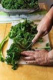 Detalj som skivar upp lockiga gröna grönkålsidor med en kniv Royaltyfri Foto