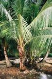 Detalj som skjutas av palmtrees i Panama arkivfoton