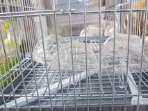 Detaljbild av delen av trådaskar för husdjur eller burar för djur fotografering för bildbyråer